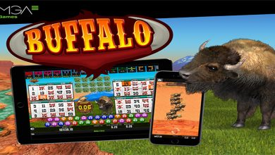 Photo of Buffalo Bingo has been launched for international operators